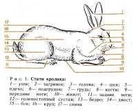 это строение кролика картинках эрика